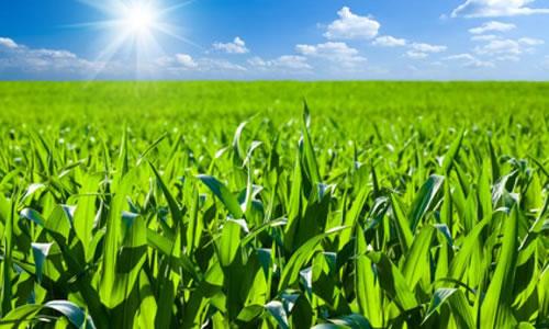 尼日利亚农业将获得中国67亿美元投资